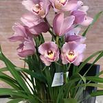 Laura, this orchid flower vase is for you!   São Caetano do Sul, São Paulo, Brazil. thumbnail
