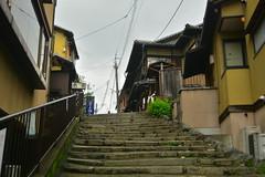 DSC_0019 (sxcxxhx) Tags: japan osaka kyoto hydrangea flower trip voyage 日本 大阪 京都 旅行