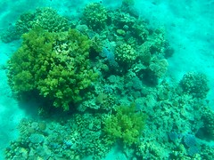 Mar Rojo (Enrica F) Tags: marrojo aqaba jordania gopro sea mar coral water