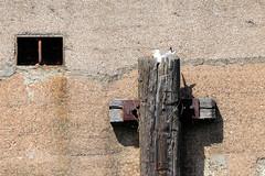 4776 Alter vermoderter Streichdalben an einer Hauswand am Billbrookkanal im Hamburger Stadtteil Billbrook; eine Möwe brütet auf dem Dalben. (christoph_bellin) Tags: alter vermoderter streichdalben hauswand billbrookkanal hamburger möwe brütet dalben hansestadt hamburg stadtteil billbrook industriegebiet gewerbegebiet kanal kanäle industriekanal wasserweg alte infrastruktur billwärder