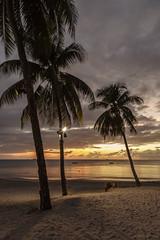 Stumped (Explore 22/06/18 #11) (andyrousephotography) Tags: stlucia stjamessclubmorganbay beach sunset caribbean sea palms leaves boats mooring horizon warm warmth longexposure