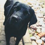 20180620-123121 Dog Bokeh thumbnail