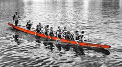 Dragon boat (radimersky) Tags: uhd red blackandwhite czerwopny czarnobiałe wb ludzie people wioślarze danzig polska poland day dzień woda water sport europa europe 43 micro fourthirds lumix dmclx100 lx100 panasonic oarsman oarsmans rower łodź boat rowers activity motława mottlau river rzeka dragonboat oar bw recreation oars smoczałódź four thirds gdańsk pomerania pomorskie rowing action