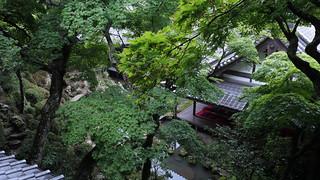 Summer Green  - Yanagidani Kannon Yokoku-ji