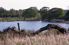 (Ir3nicus) Tags: ausen baumstamm birke c41 demaasduinen epsonv800 film fujicolorsuperiaxtra400 gras landschaft natur negativscan niederlande nikonfm2 nikonnikkor135mm128ai see analog outdoor treetrunk birch grass landscape nature negativescan netherlands lake analogue