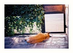 Beware of the Dog (Miguel E. Plaza) Tags: olympus om1 analogphotography analog kodak colorplus filmphotography film argentina canon nikon pentax 35mm ishootfilm leica