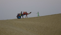 Riding camel on desert (phuong.sg@gmail.com) Tags: adventure animal background blue brown camel cameleer caravan colorful culture desert domestic dry dune festival hot hump india indian jaisalmer journey land landscape mammal men nature outdoors people person pushkar rajasthan ride safari sand silhouette sky summer sun sunlight sunset thar tourism traditional transportation travel wild