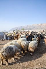 20180330-_DSC0171.jpg (drs.sarajevo) Tags: sarvestan ruraliran iran nomads farsprovince chamsatribe