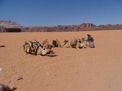 Wadi Rum (86) (pensivelaw1) Tags: jordan desert crags wadirum trains middleeast asia rockformations aqaba