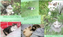 * Isola d'Elba : situazione gatti * (argia world 1) Tags: collage animali animals gatti cats erba grass piante plants argiagranuzzo