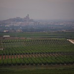 Misty day over the fruit trees, Lleida thumbnail