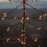 Light Decoration in Shape of Christmas Tree thumbnail