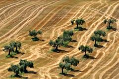 Caos calmo (luporosso) Tags: natura nature naturaleza naturalmente nikon nikonitalia nikond500 alberi trees paglia straw country countryside scorcio scorci marche italia italy campagna campi