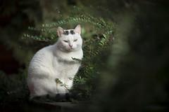 Mai Bei (Katarina Drezga) Tags: cats cat catphotography petphotography pets pet animals domesticcat nikond750 tamron70200vcg2