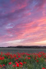 Poppy Field Sunset (RichRobson) Tags: poppy field sunset bawtry doncaster yorkshire burning sky