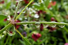 Rain - Regen - Pluie