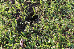 Mississippi Map Turtle; Laying Eggs, Photo # 7 (Arthur Windsor - Florida Wildlife) Tags: mapturtle southflorida yelloweyeturtle turtle reptile turtlenest palmbeachcounty mississippimapturtle