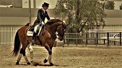 Equitación (roblestjorge) Tags: ferianacionaldesanmarcos2011 caballos equitacion aguascalientes