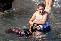 2018-06-24 Ziegenbad in Puerto de la Cruz (22) - Das Ziegenbad (Baño de Cabras) ist eine alte Tradition der Ureinwohner der Kanaren (Guanchen). Es wird jedes Jahr am 24. Juni in Puerto de la Cruz auf Teneriffa veranstaltet. Ziegenherden aus dem Umland wer (mike.bulter) Tags: animal bañodecabras canarias canaries canaryislands esp espana goat hafen kanaren kanarischeinseln puertodelacruz spain spanien tenerife teneriffa tier tradition ziege ziegenbad ziegenbaden baño de las cabras