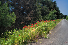 Side Road (fs999) Tags: 100iso fs999 fschneider aficionados zinzins pentaxist pentaxian pentax k1 pentaxk1 fullframe justpentax flickrlovers ashotadayorso topqualityimage topqualityimageonly artcafe pentaxart corel paintshop paintshoppro 2018ultimate paintshoppro2018ultimate masterphotos fleur flower blume bloem coquelicot poppy mohn route road landstrasse ontheroadagain pentaxfa35mmf2al fa35 35mm f2 f20 fa35f2