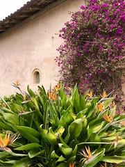 Monterey Bay, CA (- Adam Reeder -) Tags: california ca united states west coast pacific wwwkk6gpvnet kk6gpv adam reeder adamreeder areed145 bay pot anemonefish seaanemone coralreef banana y2018 m05 d26 lat370 lon1220 carmelbythesea monterey photo jpg apple iphone x pineapple daisy seaurchin cardoon mantis garden