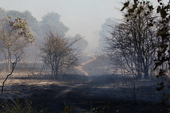 Aftermath (ArtGordon1) Tags: wansteadflats wanstead london england uk fire davegordon davidgordon daveartgordon davidagordon daveagordon artgordon1 summer july 2018 danger