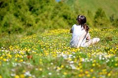 1001 flores - 1001 flowers (Gato M) Tags: azores primavera spring flor flower she ela campo portugal verde bosque prado nikon 85mm