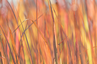 Colorful Grass