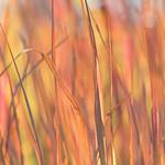 Colorful Grass thumbnail