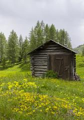 Tabià (stgio) Tags: dolomiti montagna alpi rifugio tabia fienili fioritura fiorigialli fiorialpini landscape mountains