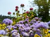 Flowers (Cassan Weish) Tags: purple flower s red yellow scene garden sun light sky nature