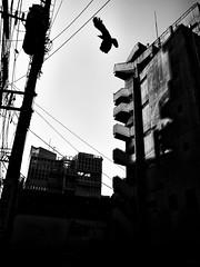 Street Fragments #359 - FUKUOKA Day and Night (Yoshi T. (kagirohi)) Tags: japan japanese hukuoka blackwhite bw street streetphotograph streetphotography alley fragment urban city cityscape snapshot ricoh gr ricohgr 日本 福岡 白黒 モノクローム モノクロ 路上 ストリート ストリートフォト 都市 風景 都市風景 スナップ スナップ写真 リコー 断片 blackandwhite monochrome depthoffield