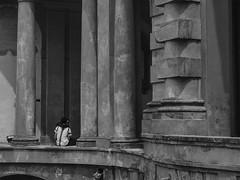 Safe between the columns ... (Chris Jadoul) Tags: chrisjadoul streetphotography nb bw bologna columns lovers