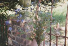 A Posy of Forget me Nots (missemorris) Tags: disposable kodak kodakfunsaver film filmcamera lofi forgetmenot flowers floral soft self