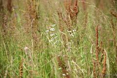 Slow Trail-Tiebelweg 2018_Karin Wernig_0065 (Foto-Karin.at) Tags: slow trail ossiachersee naturschutz fische wasservögel biotop wasser blumen flower