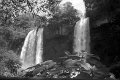 Iguazú Falls II (mavricich) Tags: cataratas falls monocromo monocromático misiones argentina agua arte árbol sol sombras iguazú naturaleza cielo cascada parque neblina lago río hierba paisaje montaña bosque