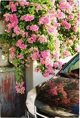 000022 (Huu ND) Tags: flower garden kodak film analog ricoh 50mm 35mm colorplus colorplus200