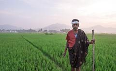 Green Guardian - 4 (mail.raharsha) Tags: nikond750 nikon sunrise guard guardians farmland farmer greens greenguardian