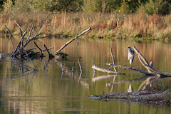 Poppenweiler (Szemifoto) Tags: bird nature water lake