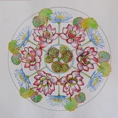 Interlude N°4 (geneterre69) Tags: mandala nénuphars cercles