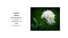 """Peony • <a style=""""font-size:0.8em;"""" href=""""https://www.flickr.com/photos/124378531@N04/29640284278/"""" target=""""_blank"""">View on Flickr</a>"""
