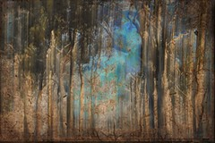 Forest (holly hop) Tags: trees landscape bush farm rural australia centralvictoria victoria emu icm intentionalcameramovement blur overlay texture nature forest sliderssunday
