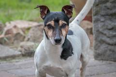 IMG_8305 (Hilda van Esch Photography) Tags: animals childavaneschphotography canoneos80d sigma150600c