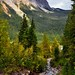 A Stream Flowing Through the Forest and Mountains of the Canadian Rockies (Portrait Orientation, Yoho National Park)