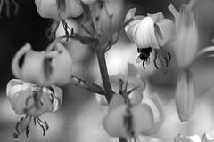Botanical Gardens + Joss June 18 (copyrightsplashphotography) Tags: flowers flower botanicgardens botanical botanic botanicalgardens plants