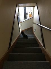 Advance Guard (sjrankin) Tags: 8july2018 edited animal cat argent stairs stairway door genkan entrance dark guard kitahiroshima hokkaido japan