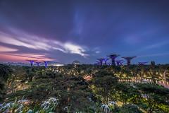 Sunrise at Gardens by the Bay (Jazzfrey) Tags: nikon nikonian nikonphotography nikonphotographer nikonphotographers singapore laowa nisi nisiglobal nisifilters nisisingapore venusoptics landscape landscapephotography havingfun nikond810 d810 sunrise gardensbythebay