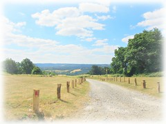 ..view from the hill .. (John(cardwellpix)) Tags: tuesday 10th july 2018 view from newlands corner guildford surrey uk 4298