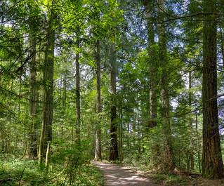 A Stroll Beneath a Green Canopy