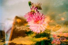 A not so lucid dream (lunacornata) Tags: 35mm film analog analogue analogica analogico analoga analogo landscape nature naturescape double exposure